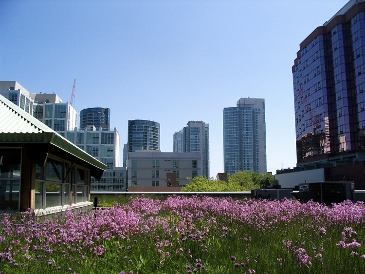 Green roof at Mountain Equipment Coop, Toronto, Canada - Wikimedia Commons