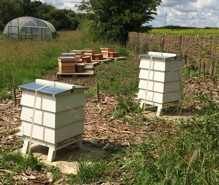 set of beehives