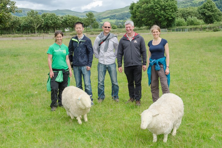 team of researchers with sheep