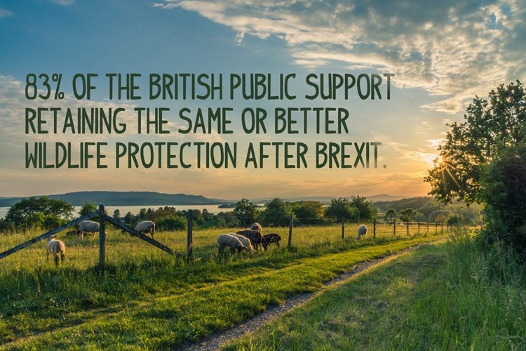 83% of the British public support retaining the same or better wildlife protection after Brexit