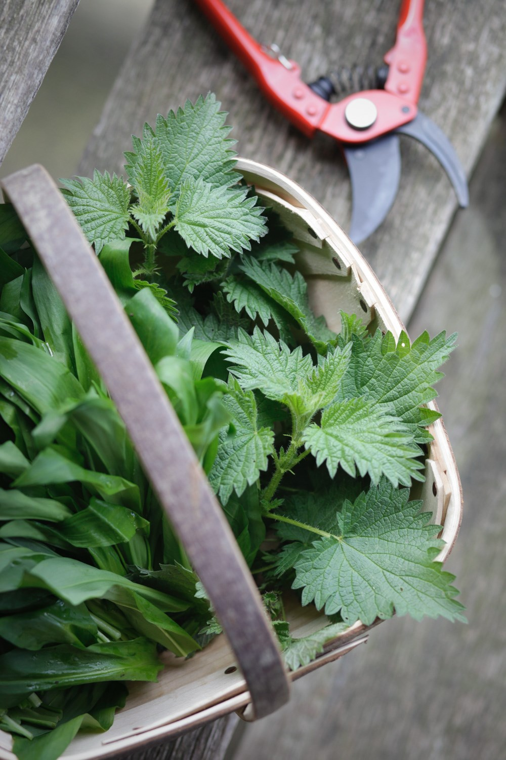 Foraged Nettle Gnocchi with Garlic Pesto