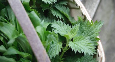 nettles and wild garlic.jpg