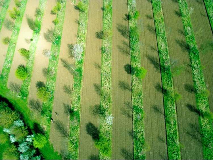 agroforestry and climate change