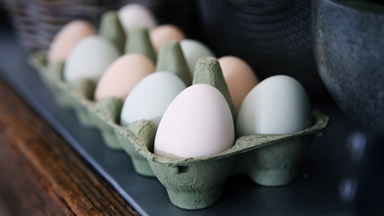 Photo of carton of eggs by Caroline Attwood
