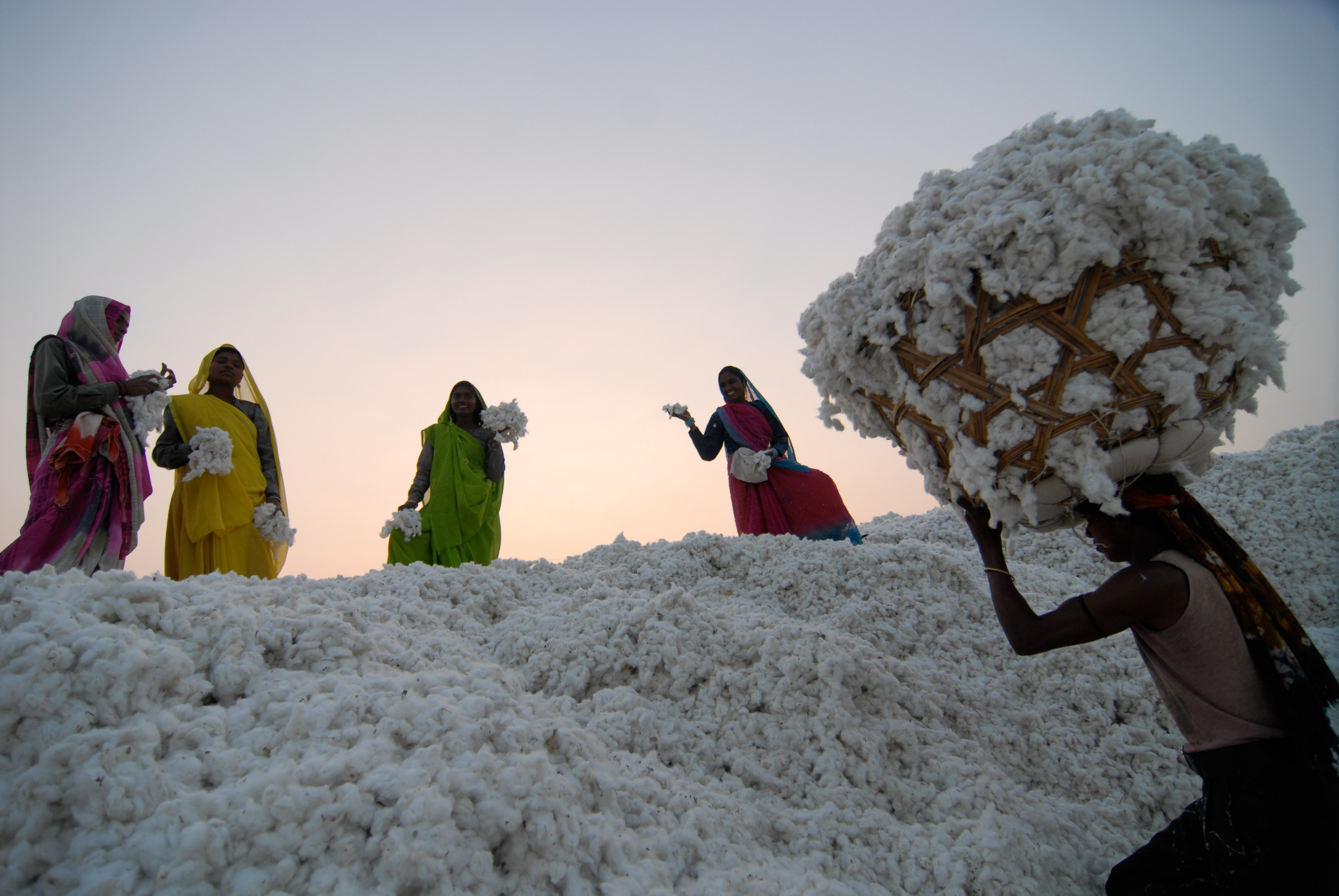 Thirteen Of World's Biggest Brands Commit To More Sustainable Cotton By 2025