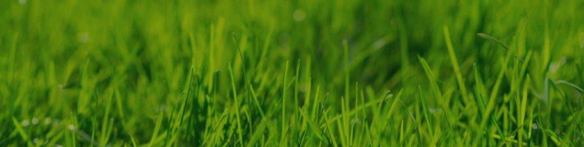 Grass-background-with-dark-filter-image-no-text.jpg