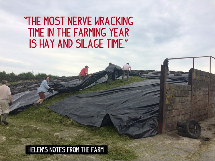 Tucking silage up for the night