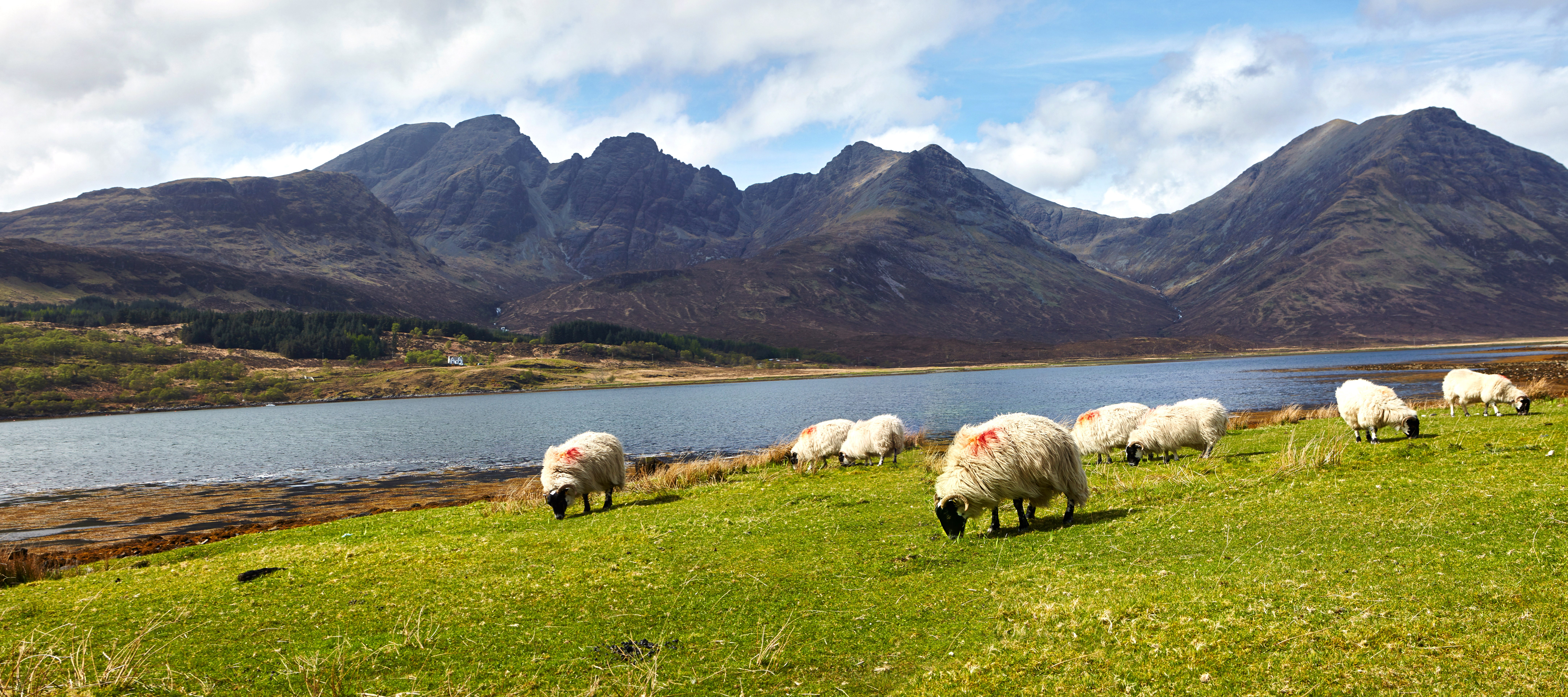 sheep-loch-and-hills-scotland-shutterstock.jpg