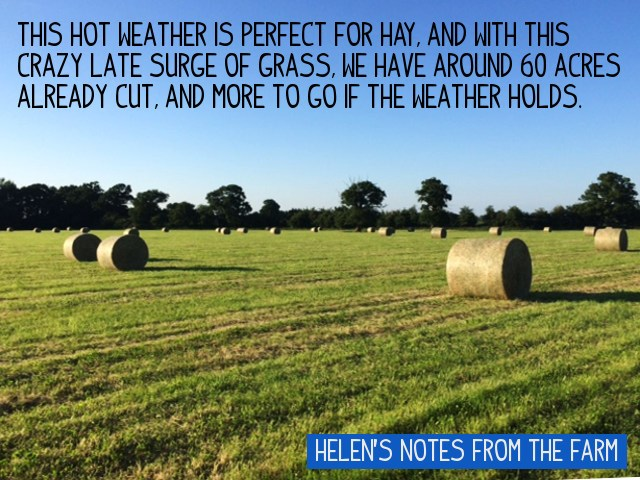 """This hot weather is perfect for hay, and with this crazy late surge of grass, we have around 60 acres already cut, and more to go if the weather holds"""