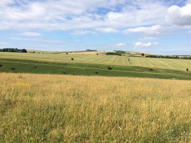 View of the downs from Helen's farm