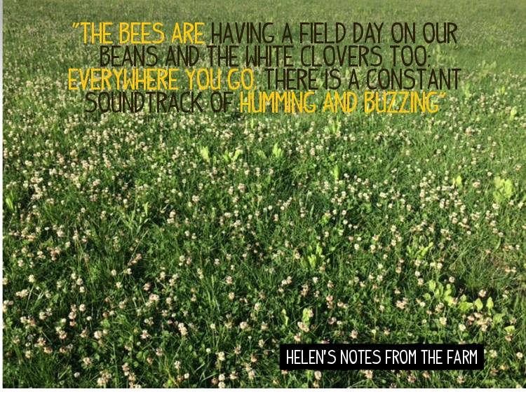 Bees are buzzing at Helen's farm