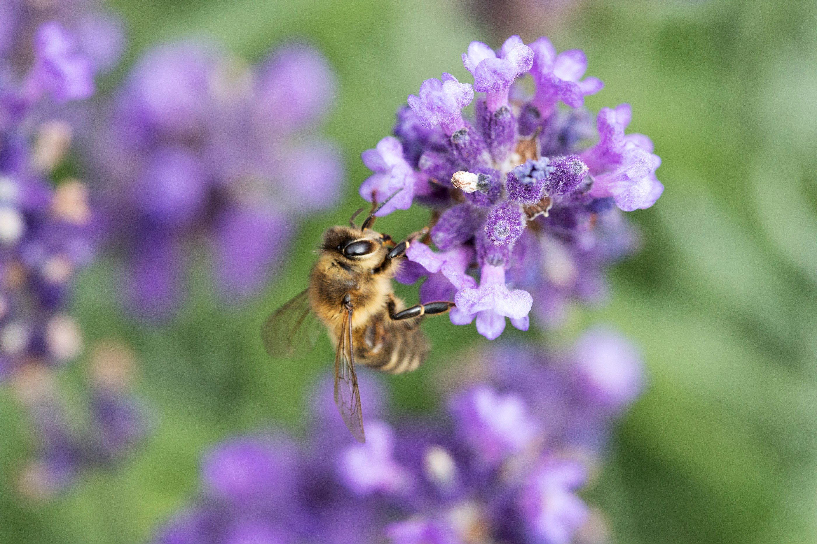 UK Backing Total Ban On Bee-Harming Neonicotinoid Pesticides