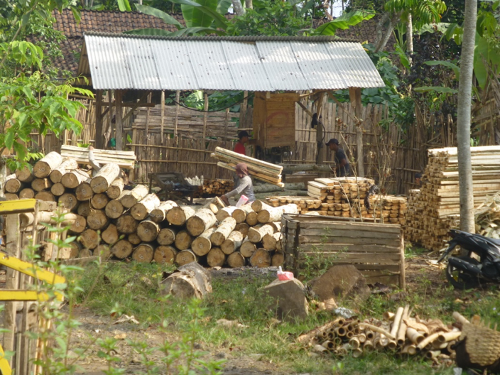 harvested timber in probolinggo