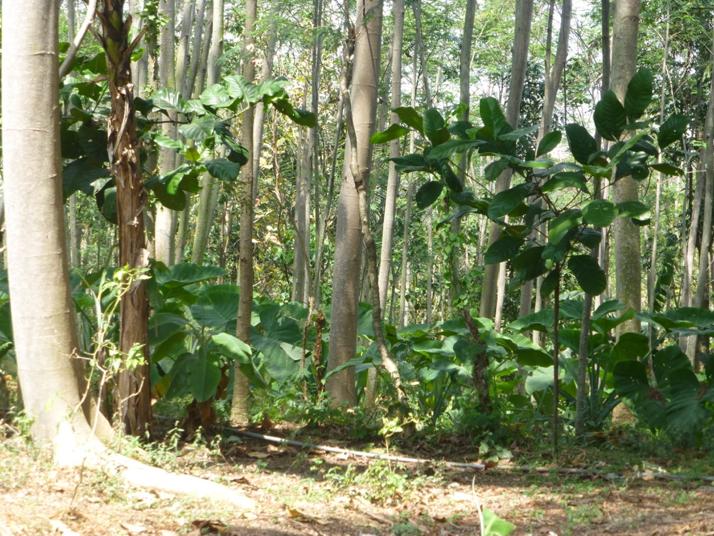 photo of the forest in probolinggo