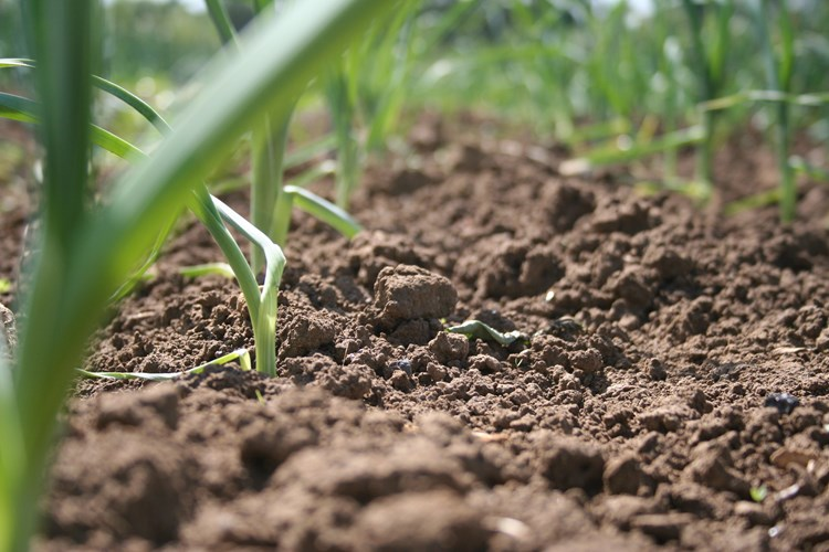How can we achieve healthy soils in the uk for Organic soil meaning