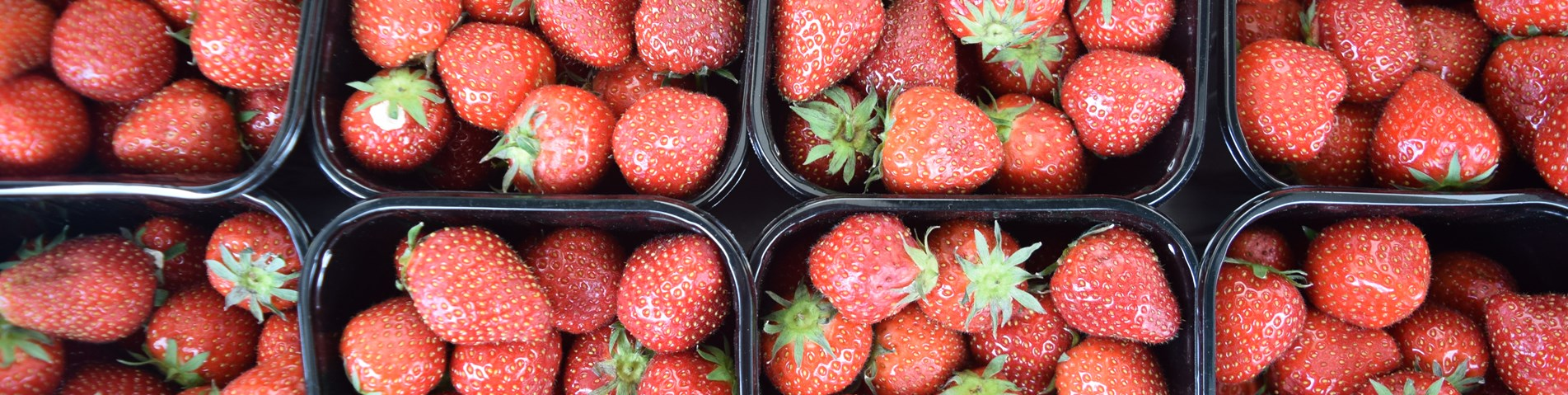 Strawberries SOUTH WARWICKSHIRE HOSPITALS - JUNE 2015 (31).JPG