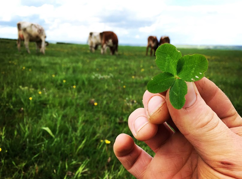 Field Lab: All Over Clover