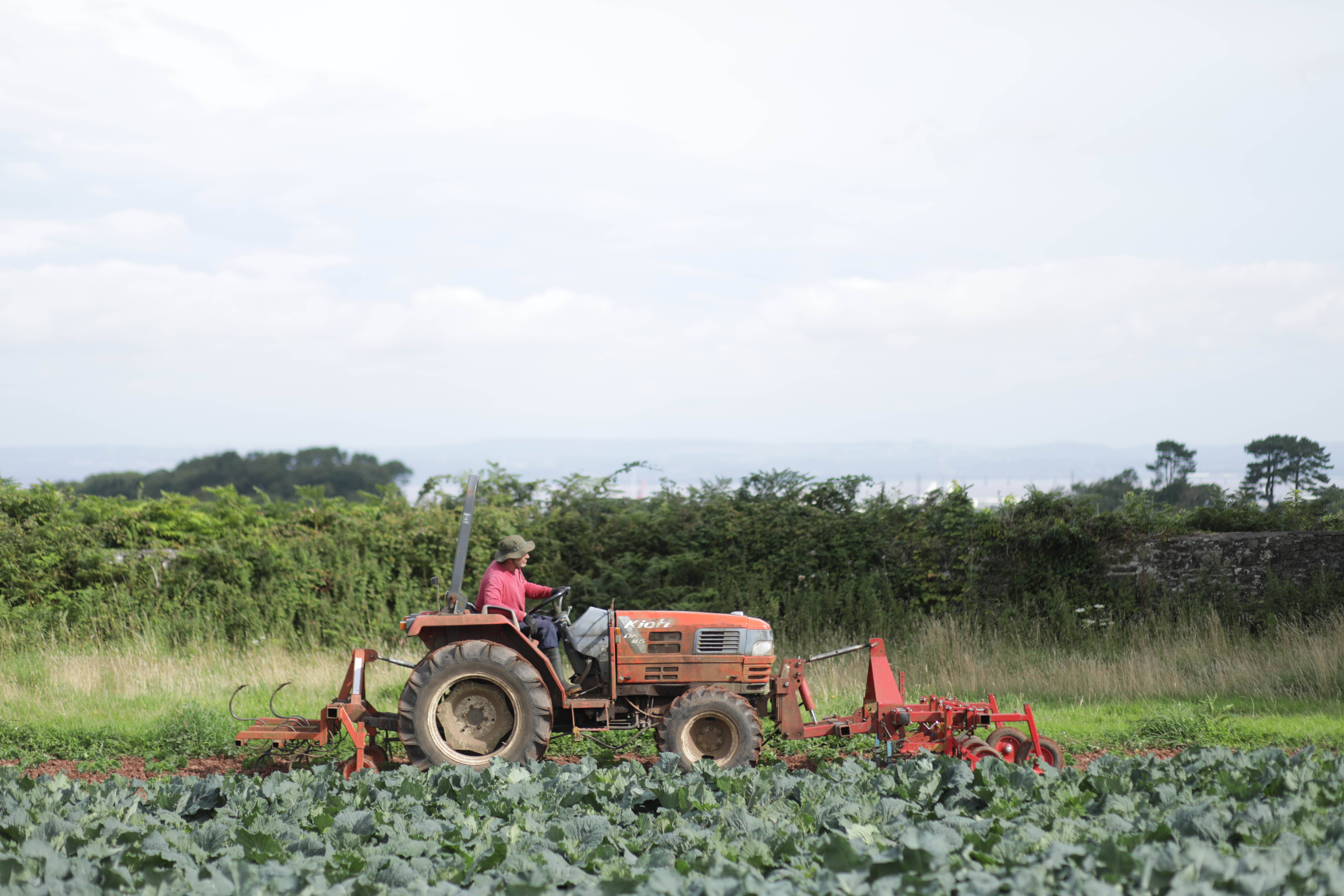 Our commitment to ensuring a resilient food and farming system in the UK
