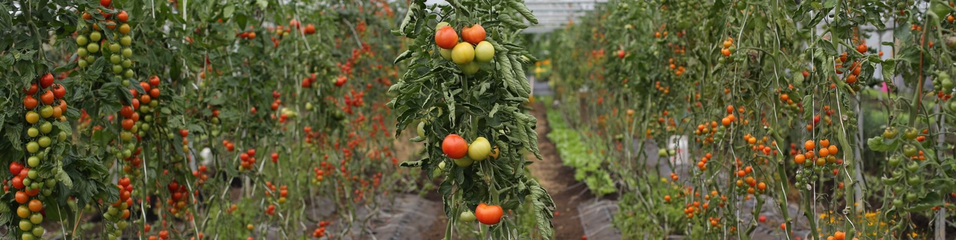 Market Gardening Essentials