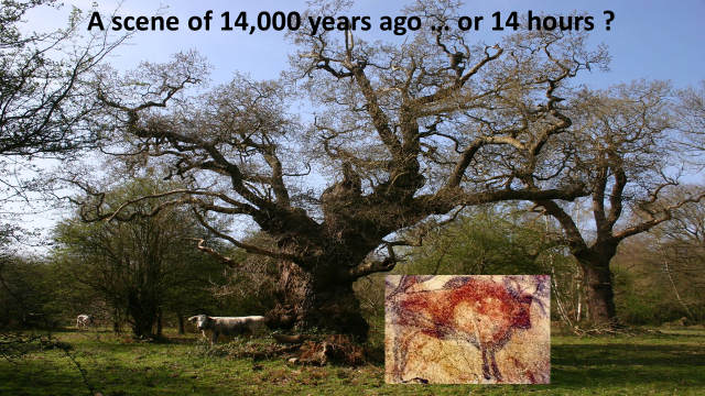 ancient tree and painting
