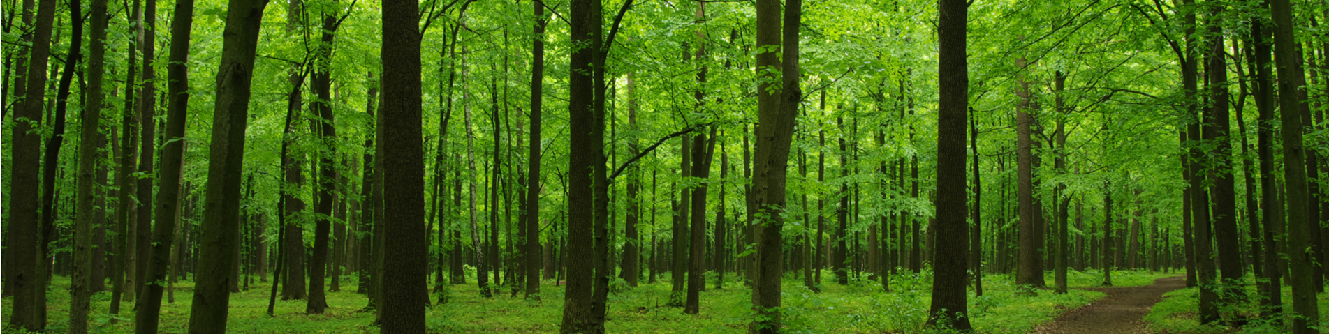 Green forest banner cropped