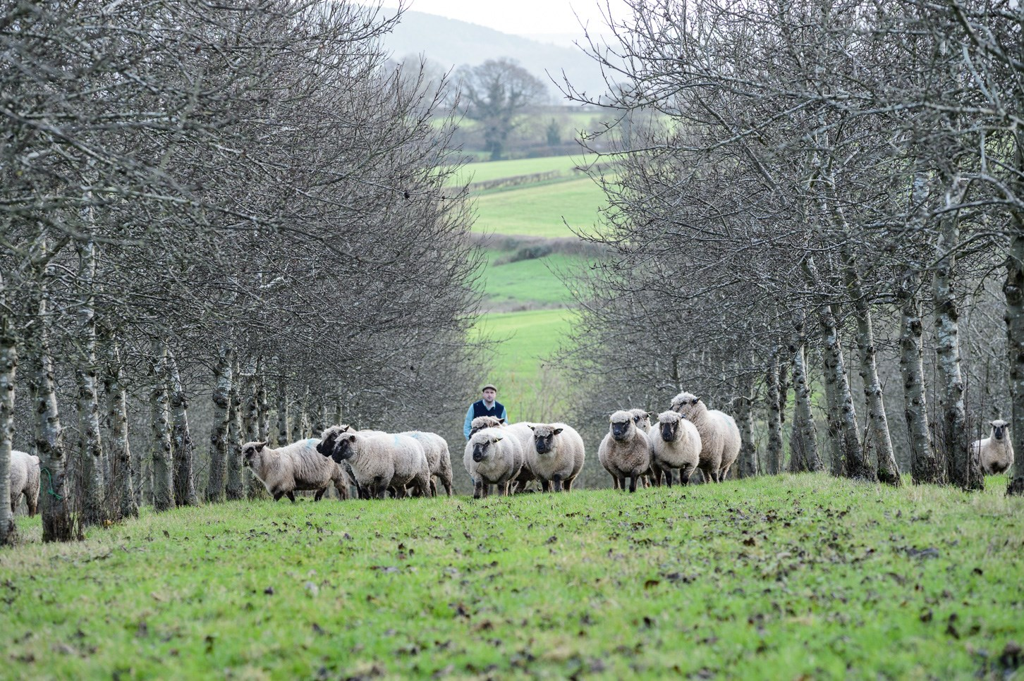 Agroforestry in England