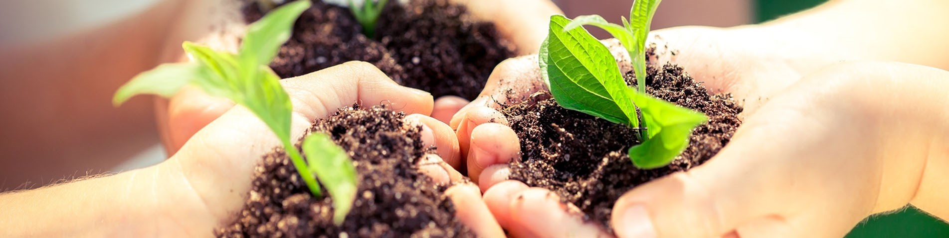 soil and plants in hands_web banner.jpg