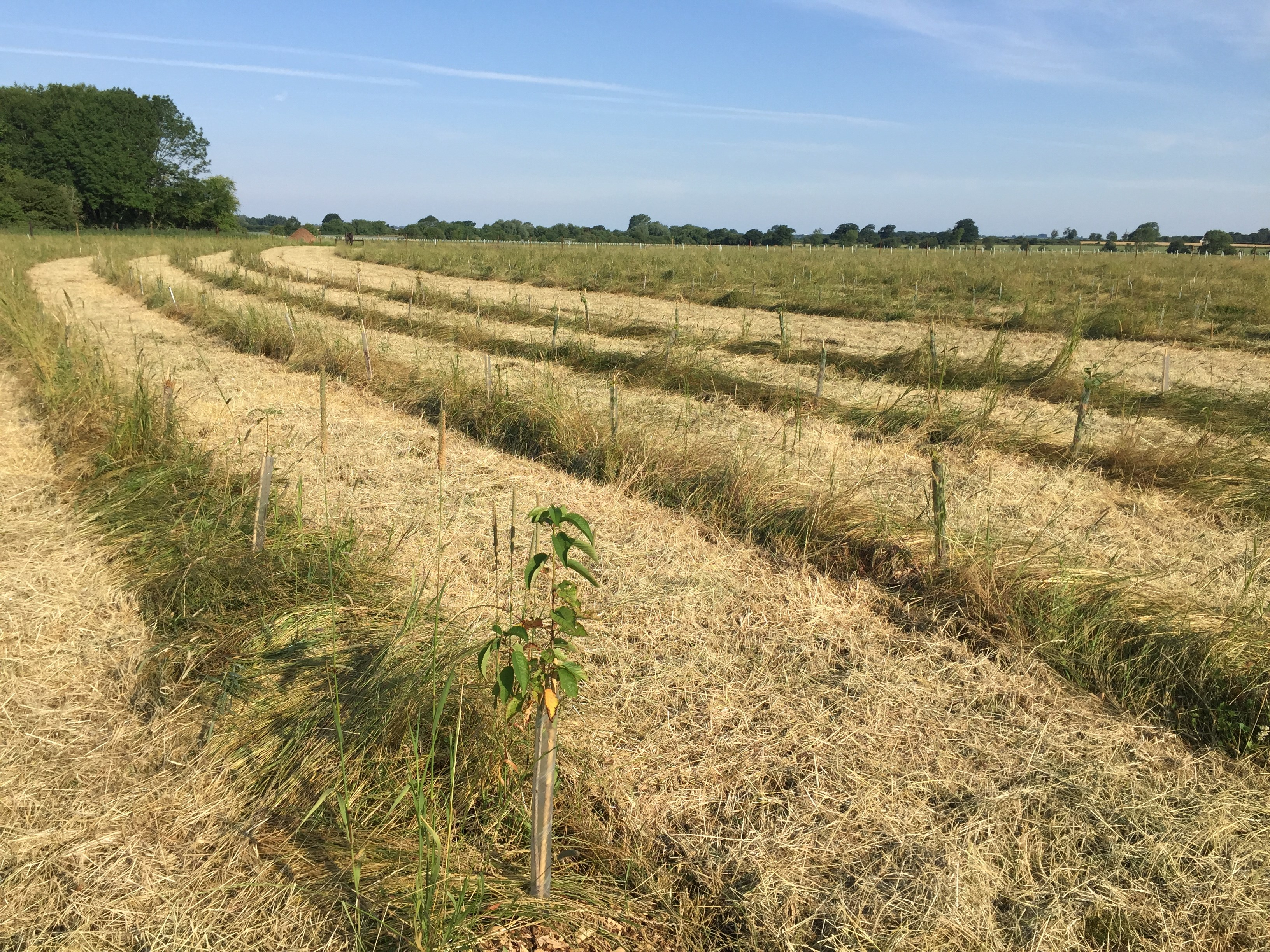 Dealing with Drought at Eastbrook