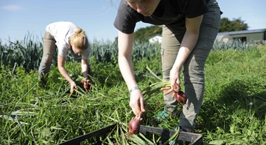 Brexit: Migration Advisory Committee report