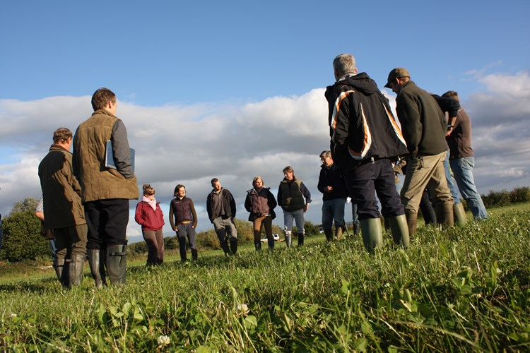 An organic arable field walk with farmers looking at crops