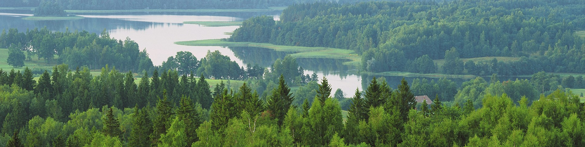 late spring in Latvian forests_banner.jpg