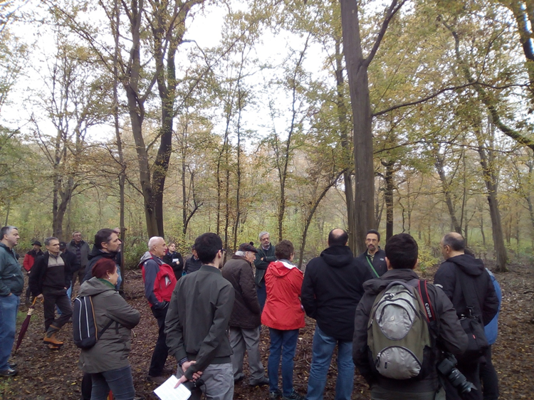 Group of delegates at the fourth Italian National Congress of Silviculture exploring a forest