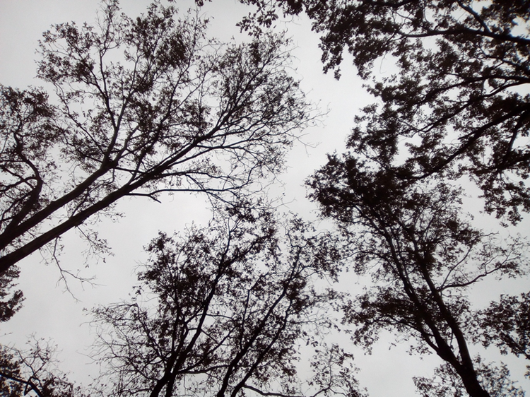 A forest canopy from below
