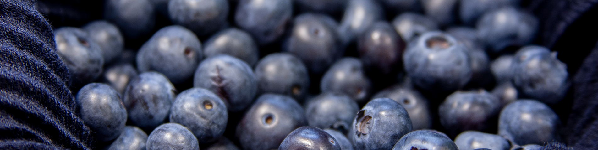 Blueberries PNG.png