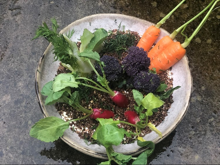 thomasina's edible soil, topped with a selection of hearty organic veg