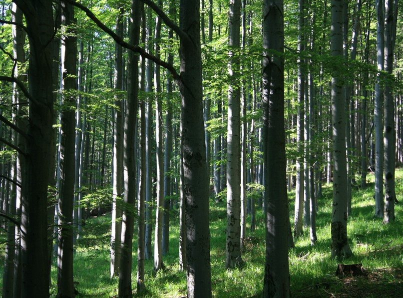 Covid 19, Update for Forestry Certificate Holders