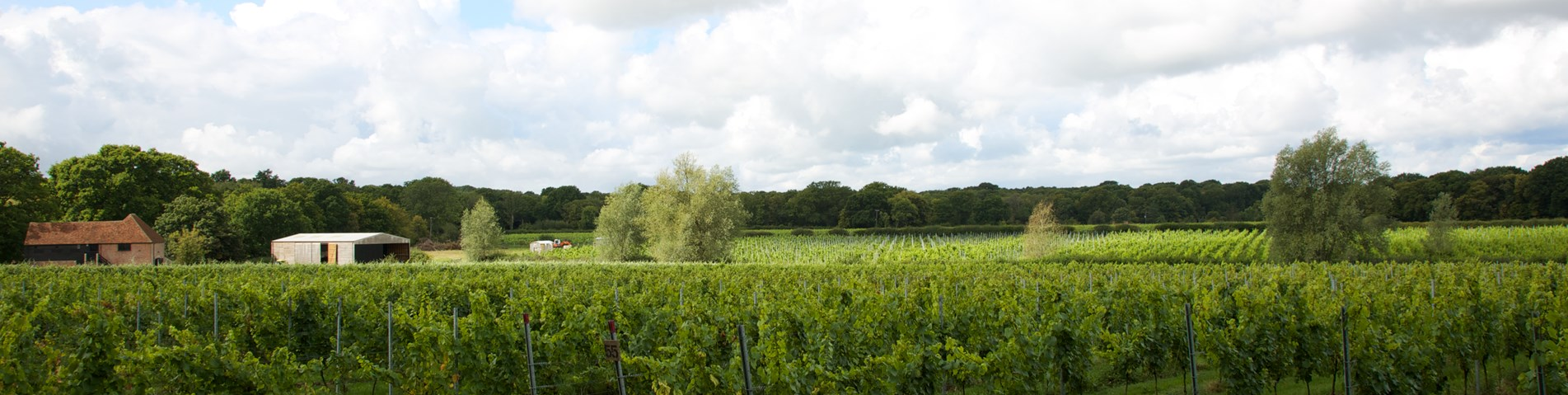 Oxney Estate Vineyard