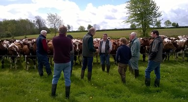 Reducing antibiotic use with farmer field schools
