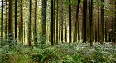 Big win for Forestry Certification