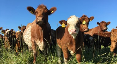 Benchmarking the benefits of mob grazing for biodiversity