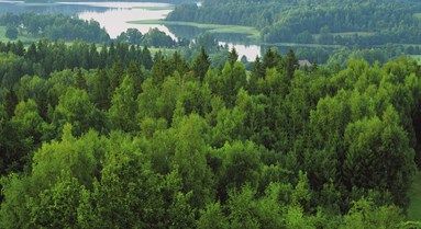 New FSC Forest Management Pesticides Policy in force