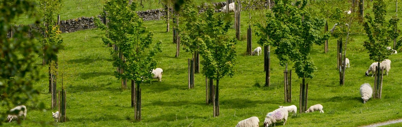 Getting started with your agroforestry project