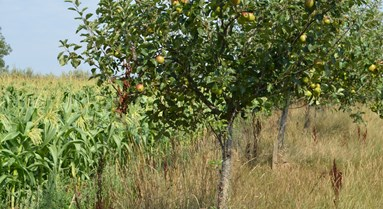 Agroforestry: more support needed