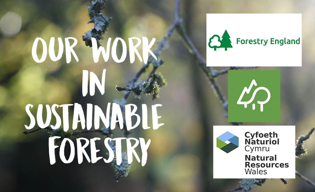 our work in sustainable forests around the UK