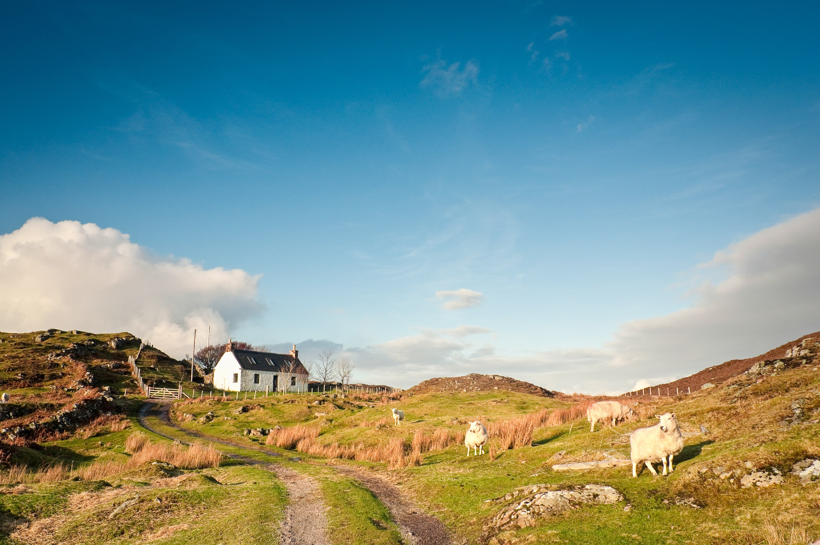 Farmhouse and sheep in Assynt - Shutterstock.jpg