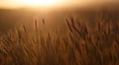 A Bold Vision For Farming - Michael Gove at Oxford
