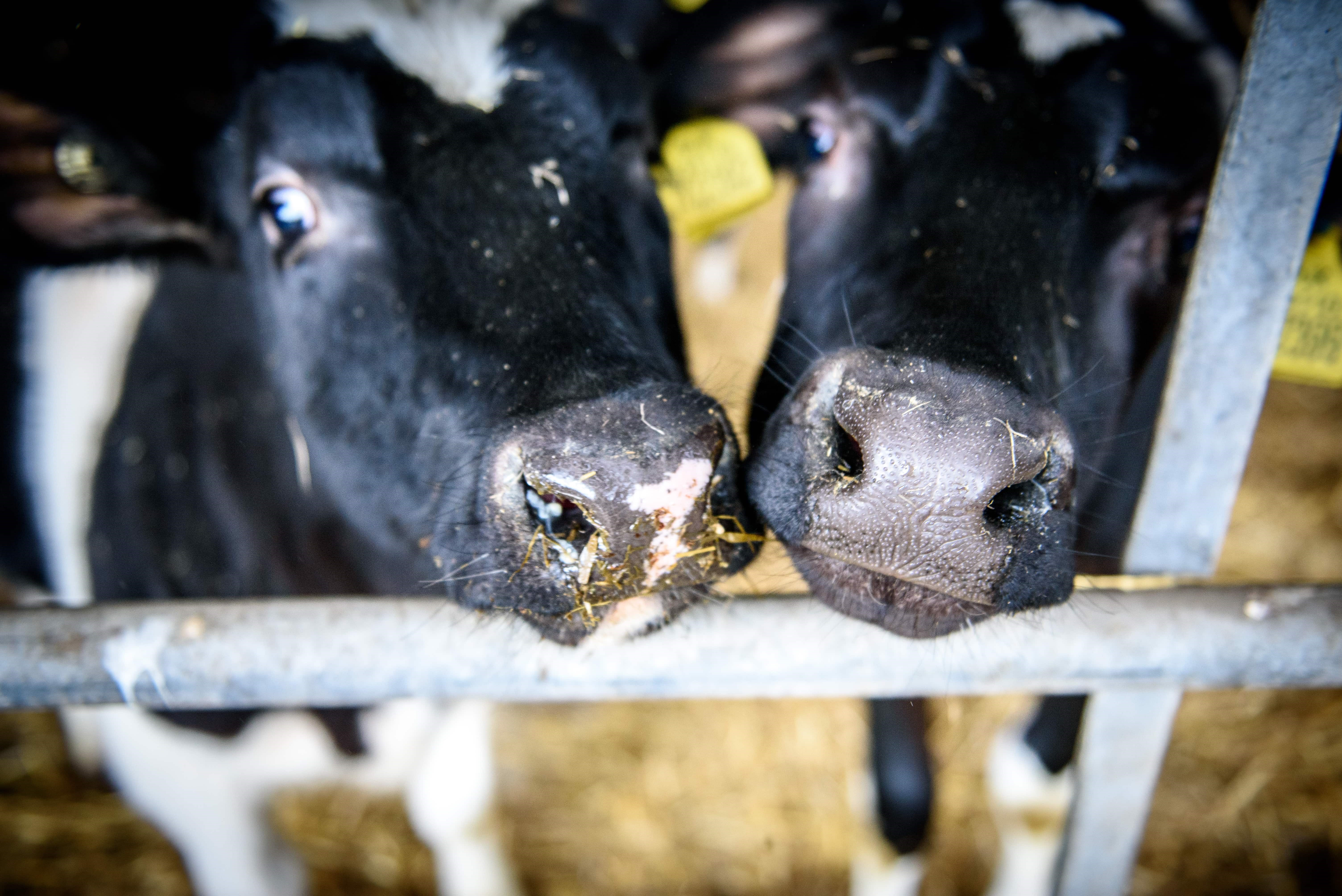Stakeholders put aside differences to discuss farm antibiotics - but disagree on some key issues