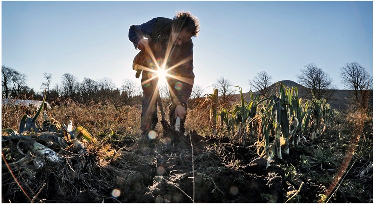 digging into soil with Sun in distance