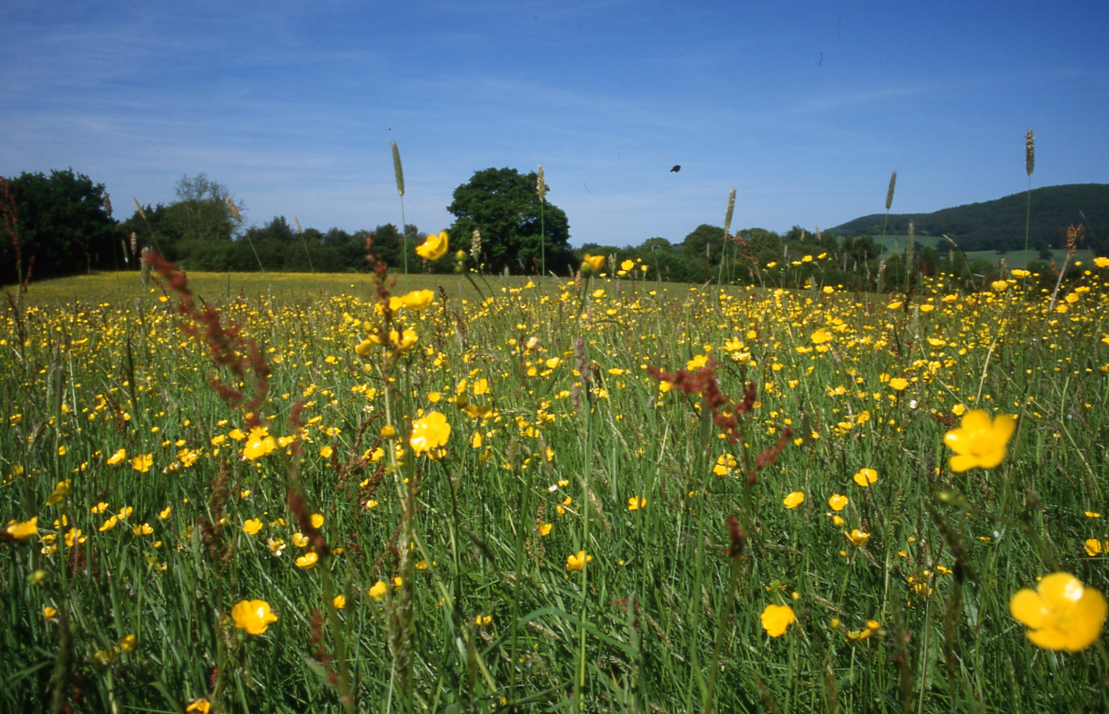 UK Organic Farmland in conversion increases with growing organic market
