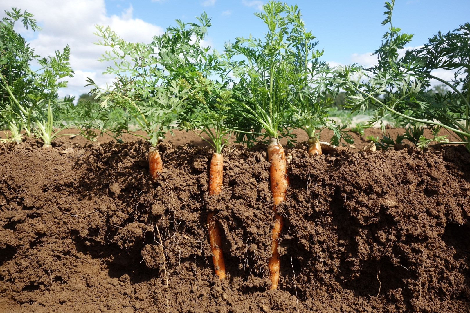 Drop In Organic Farmland Despite Growing Market